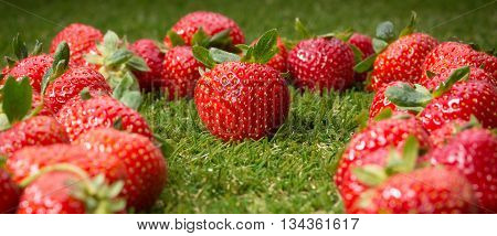Strawberry, fresh strawberry, ripe strawberry, healthy strawberry, strawberry closeup. Red strawberries on green grass.