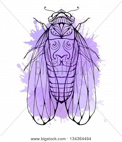 Illustration cicada with boho pattern and watercolor splashes. Vector element for coloring prints for T-shirts tattoo and a sketch for your creativity
