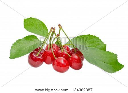 Several ripe dark red sweet cherries with the stalks and several leaves of cherry on a light background