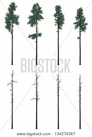 Set of pinetrees and pinetree trunks in flat colors