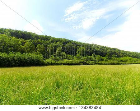 Large meadow and deciduous forest during sunny day in wild nature