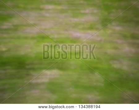 Defocused Flowers And Plants In Meadow  In Moved Background.