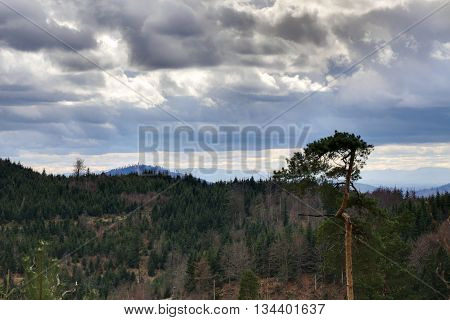 View Over Forest Near Bad Herrenalb, Baden-wurttemberg, Germany
