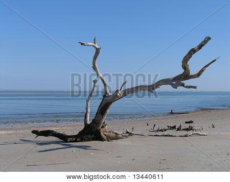 Island Treasure, Folly Beach