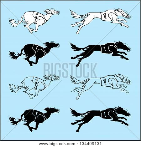 Vector set of silhouettes running dog saluki breed, in dog racing or coursing dress