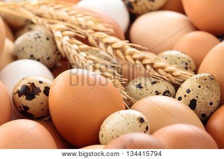 Fresh eggs background on farmers market .