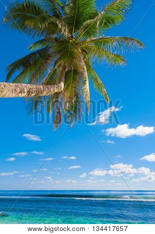 Beach Sea Overhanging