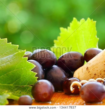 Grape and cork on green foliage - blurred wine background