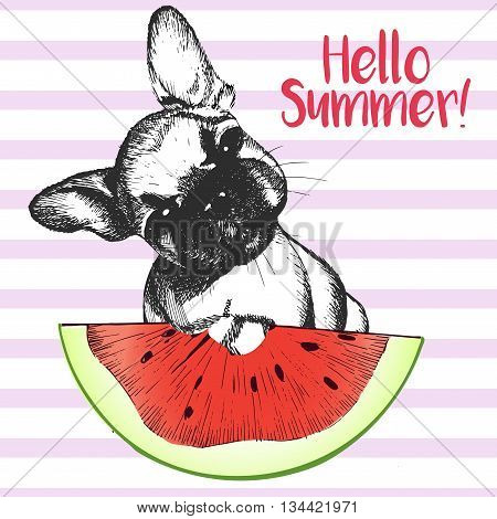 Vector hand drawn illustration of frewnch bulldog puppy dog eating the watermelon slice. Hello summer. Isolated on light green strips. fresh fashion vibrant summer poster.