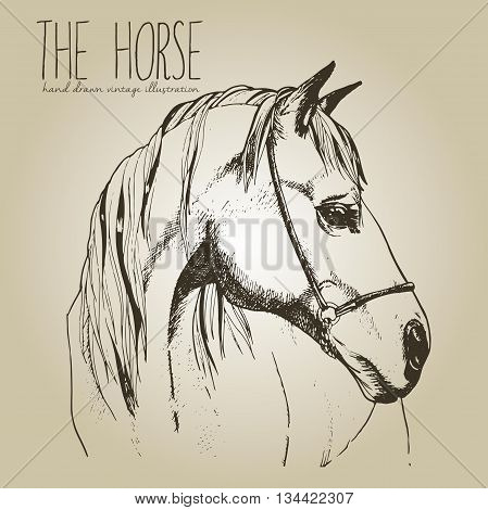 Vector portrait of the horse. Hand drawn vintage style illustration. Isolated on craft brown background. Engraved style stallion head drawing.