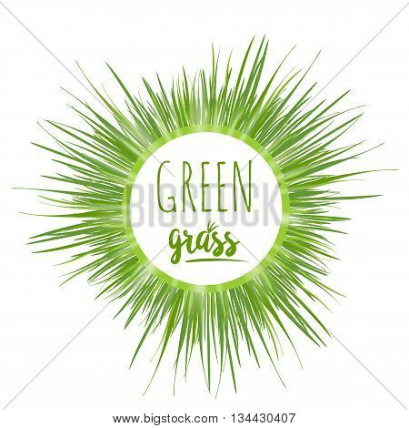 Realistic green grass lawn isolated on white. Floral eco nature background. Organic food healthy food. Web vector illustration.