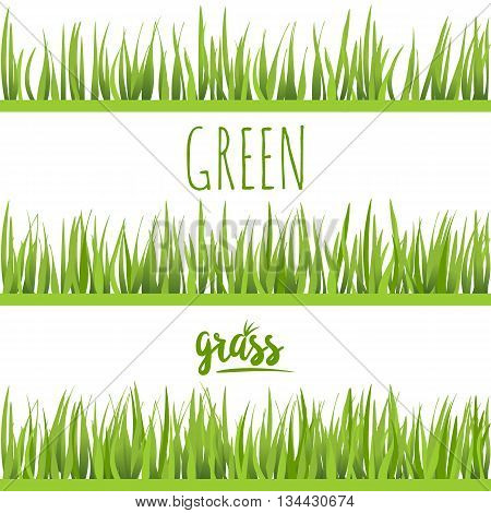 Set realistic green grass lawn isolated on white. Floral eco nature background. Organic food healthy food. Web vector illustration.
