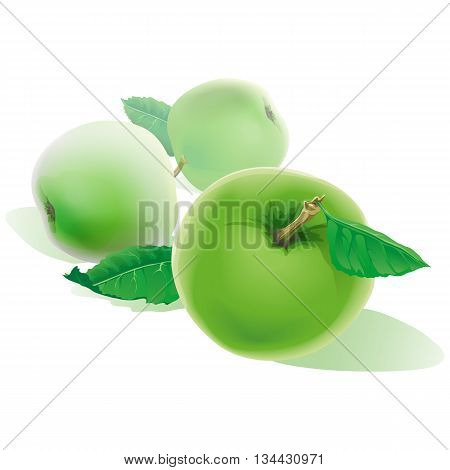 Green Apples Banner. Three Realistic Apples with Green Leaves. Background with Ripe Green Apples. Green Apples Isolated Vector. Apple Illustration.