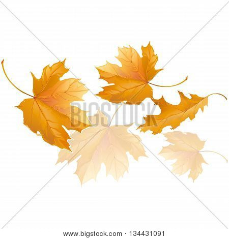 Falling yellow autumn maple leaves fly in the wind isolated on white background vector illustration.
