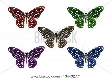 Multicolor Spotted Zebra Butterfly