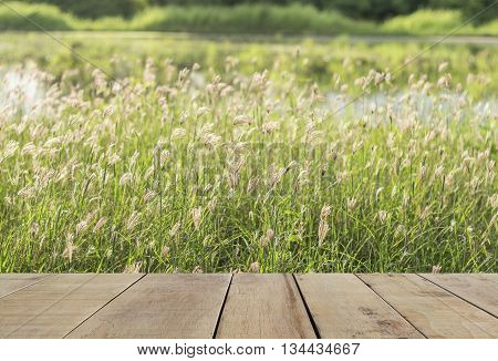 wooden plank with green grass and little flowers grass on the field. Flower grass with blurred background
