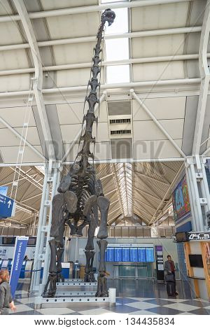 CHICAGO - APRIL 05, 2016: dinosaur skeleton in Chicago O'Hare International Airport. O'Hare is currently a major hub for American Airlines, United Airlines and Air Choice One.