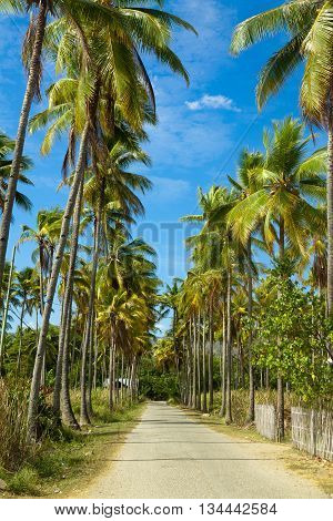 Path through of coconut palms leading to beach. Island Flores, Riung. Indonesia.