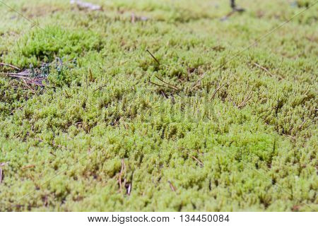 Moss At Olympic National Park, Washington,  Usa