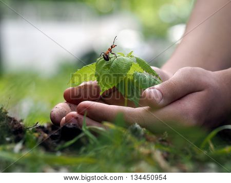human hands carefully hugging little sprout. At the plant ant. Concept - environmental protection