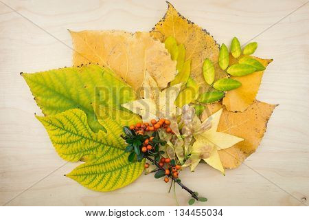A Bouquet Of Yellow, Green Autumn Leaves,berries And Seeds.