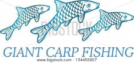Vector illustration of a carp fish. Element of fishing logo.