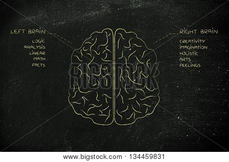 Left And Right Brain With Function Descriptions