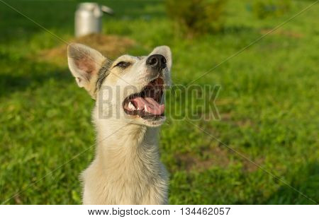 Outdoor portrait of adorable mixed breed young dog looking up