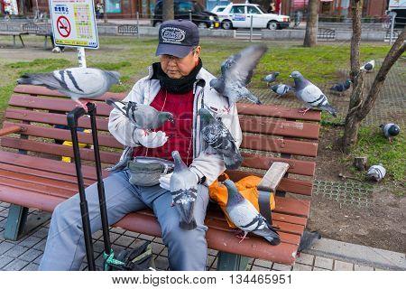 SAPPORO HOKKAIDO JAPAN - APRIL 24 2016: Unidentified old man feeding food to may pigeon birds in Odori park Sapporo.