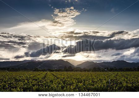 Sunset through clouds over Napa Valley vineyard. Sun rays peaking through clouds on the mountains in Napa Valley. Summertime in the lush vineyards of Napa.