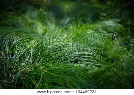 macro detail outdoor green fresh grass detail