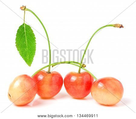 four cherries with leaf closeup isolated on white background.