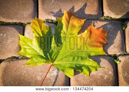 Autumn Maple Leaf On The Pavement