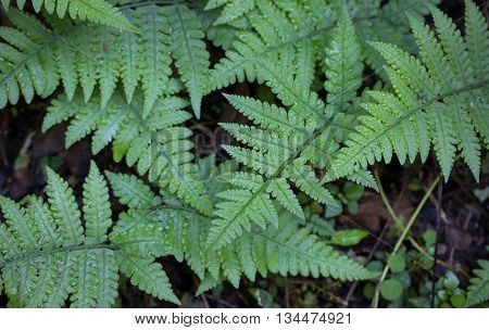 green fern leaf in the tropical forest