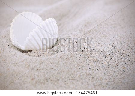 White sea shells with sand as background