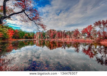 Maryland pond in Autumn near the Chesapeake Bay reflecting fall colors