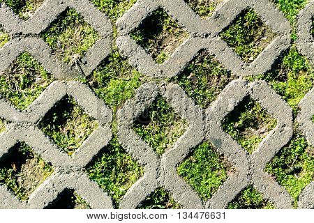 Concrete grid on rhombus shape with grass