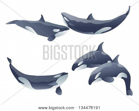 set of cartoon killer whales show on white. vector illustration