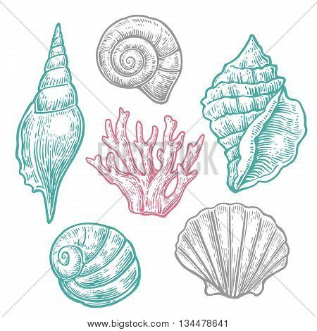 Sea shell. Set engraving vintage illustrations. Isolated on  white background.