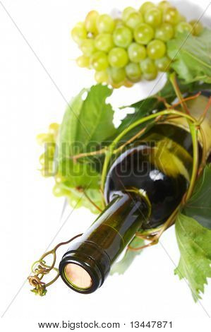 wine bottle and young grape vine