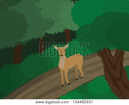 Deer walking on a forest, dirt road.