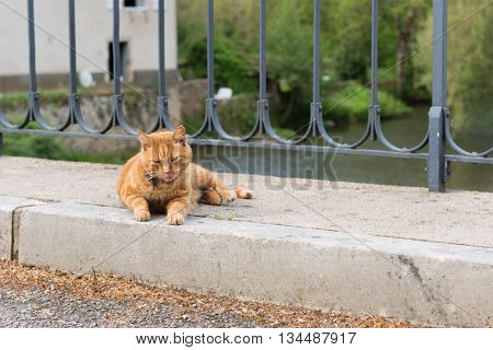 Red cat laying at the street