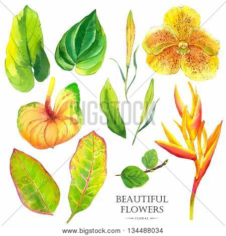 Watercolor set of green leaves begonia, anthurium, strelitzia and orchid. Handmade painting on a white background.