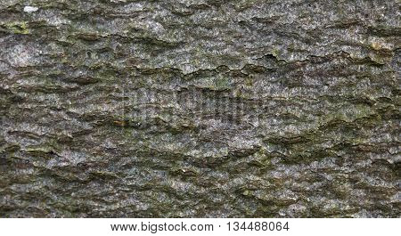 Macro Of The Bark Of A Deciduous Tree