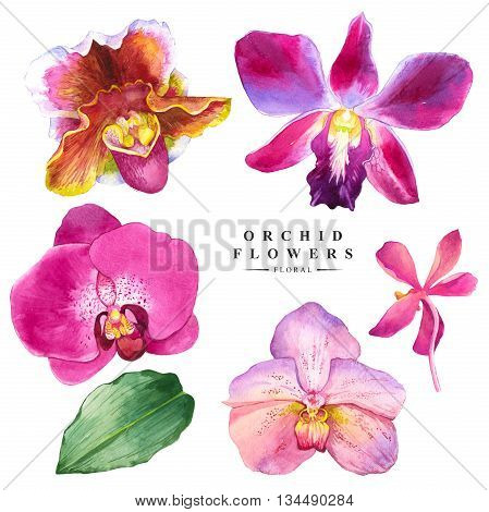 Watercolor collection of orchid flowers. Handmade painting on a white background. Spa style. Violet flowers.