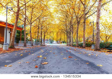 empty road with yellow fallen leaves