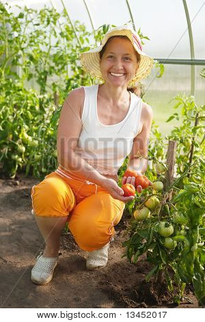 Woman Is Picking Of Tomato