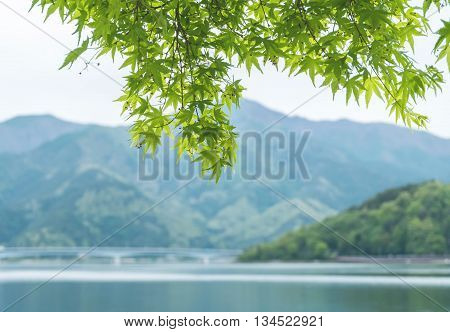 Closeup beautiful green leaves with blurred mountain and lake view background