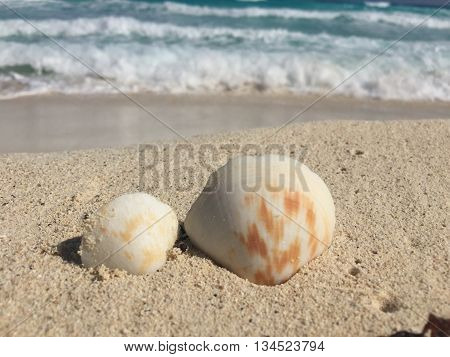Camera focusing in on two ittle sea shells on a white sand beach.