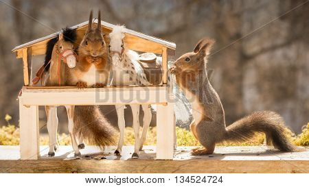 close up of red squirrels between horses in a stable with one standing outside